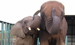Elephants of Africa Rescue Society